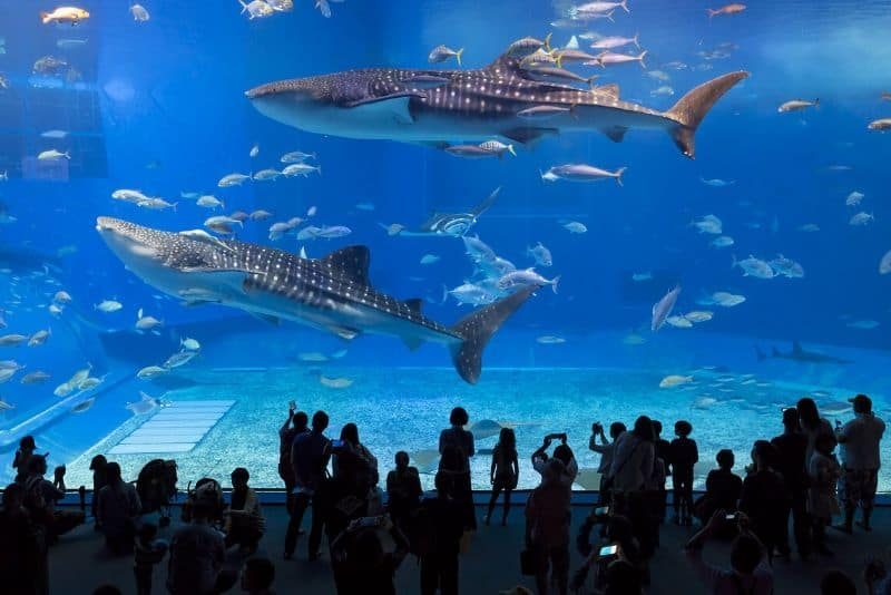 The 4 Best Aquariums To Visit While In America